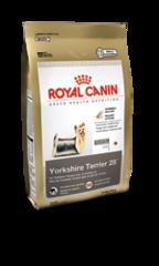 yorkshire-terrier-28_